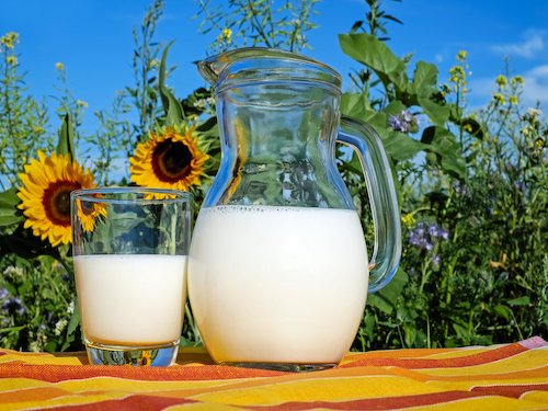 laktoza w mleku